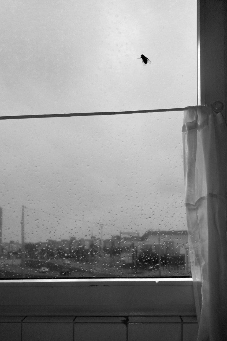 Fliege an einer Fensterscheibe