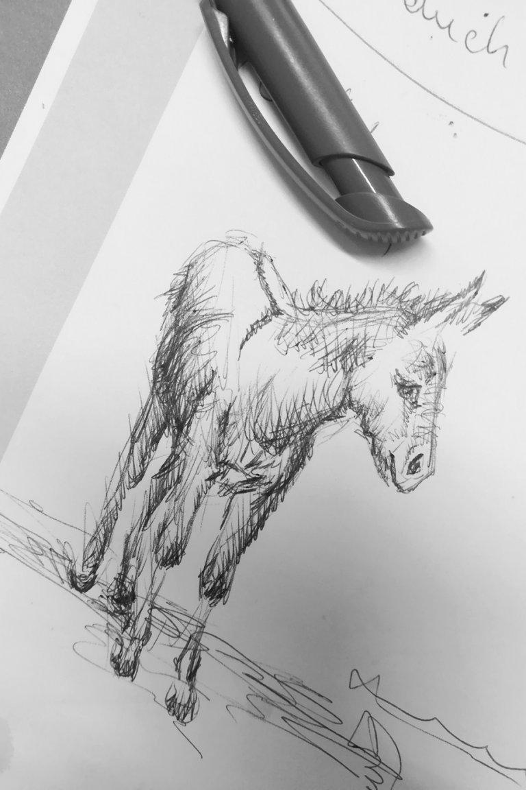 Esel, mit Kugelschreiber gemalt