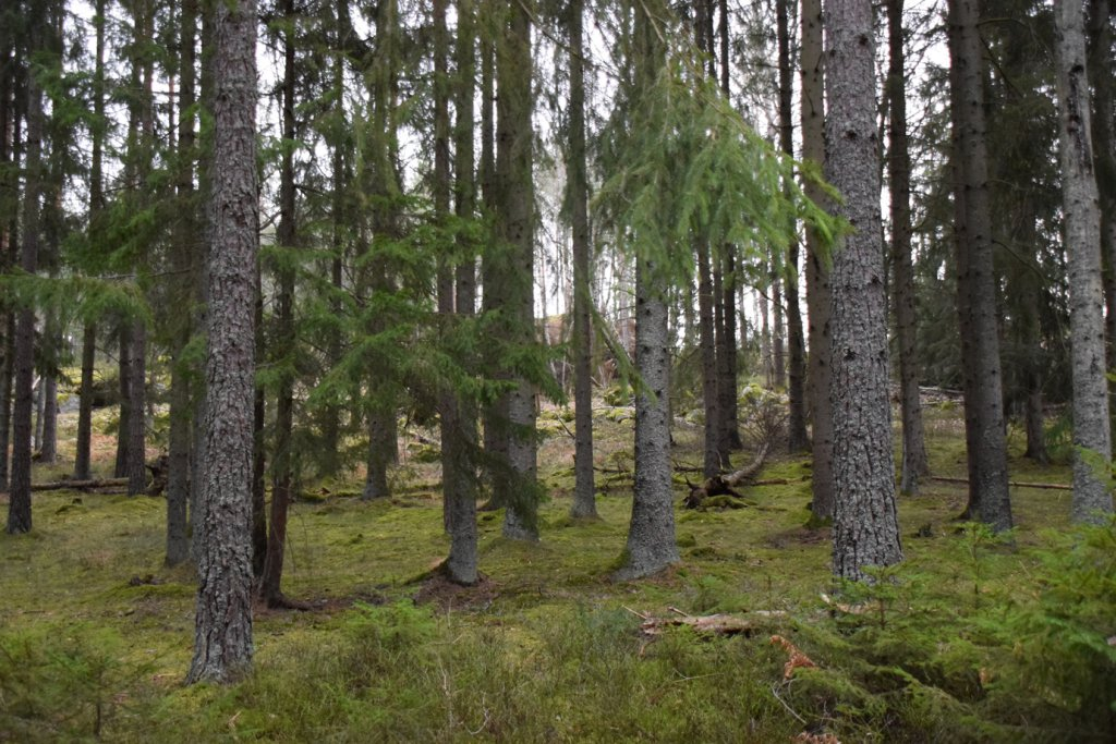 Tyresta Nationalpark Schweden