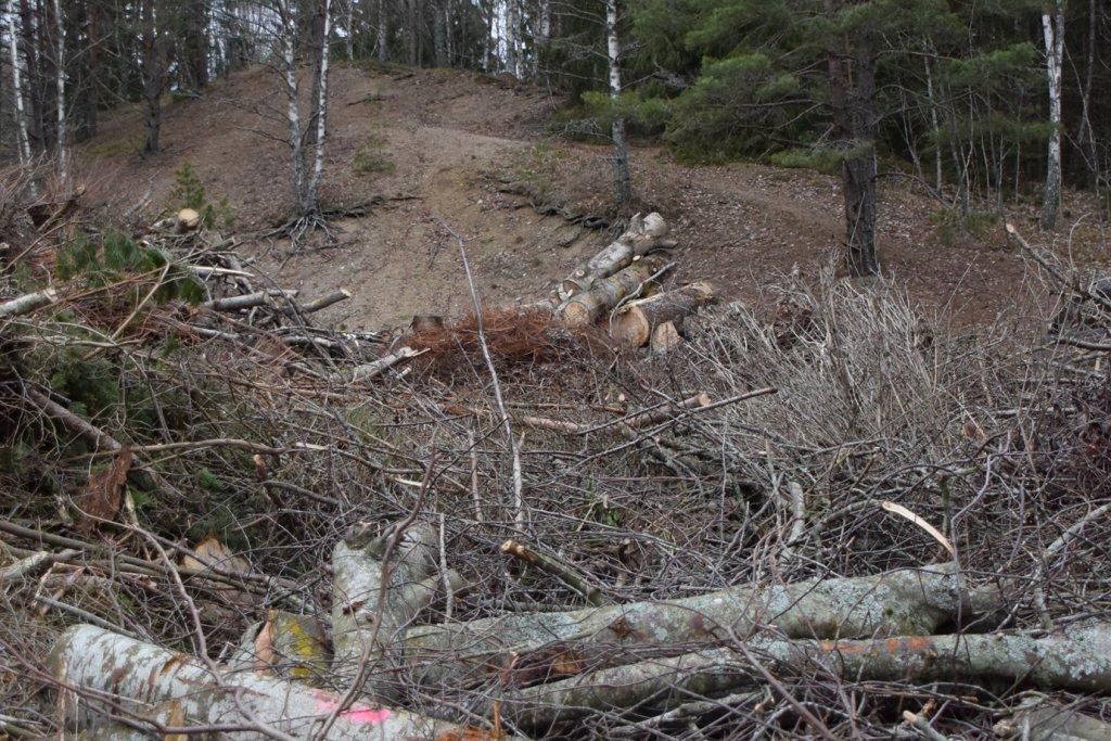 Illegale Abholzung borealer Nadelwälder